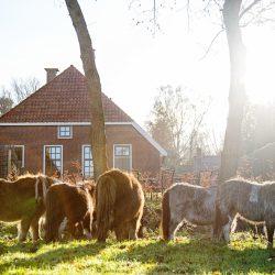 Boerderij Lodges - Het Verborgen Verblijf